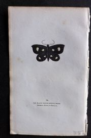 Captain Brown 1834 Antique Hand Col Moth Print. Black Cream Moth 94 Britain
